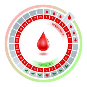 ovulation-tracking-cycle-chart-from-american-pregnancy-association