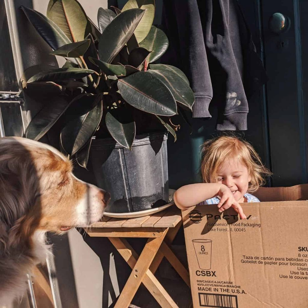 child plays in cardboard box while dog looks on