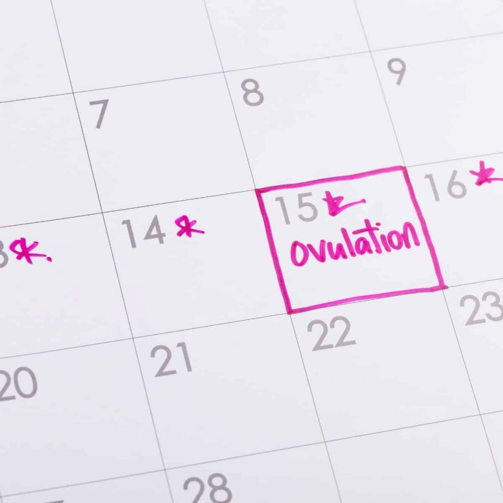 "This image shows a calendar with ""ovulation"" marked in pink."
