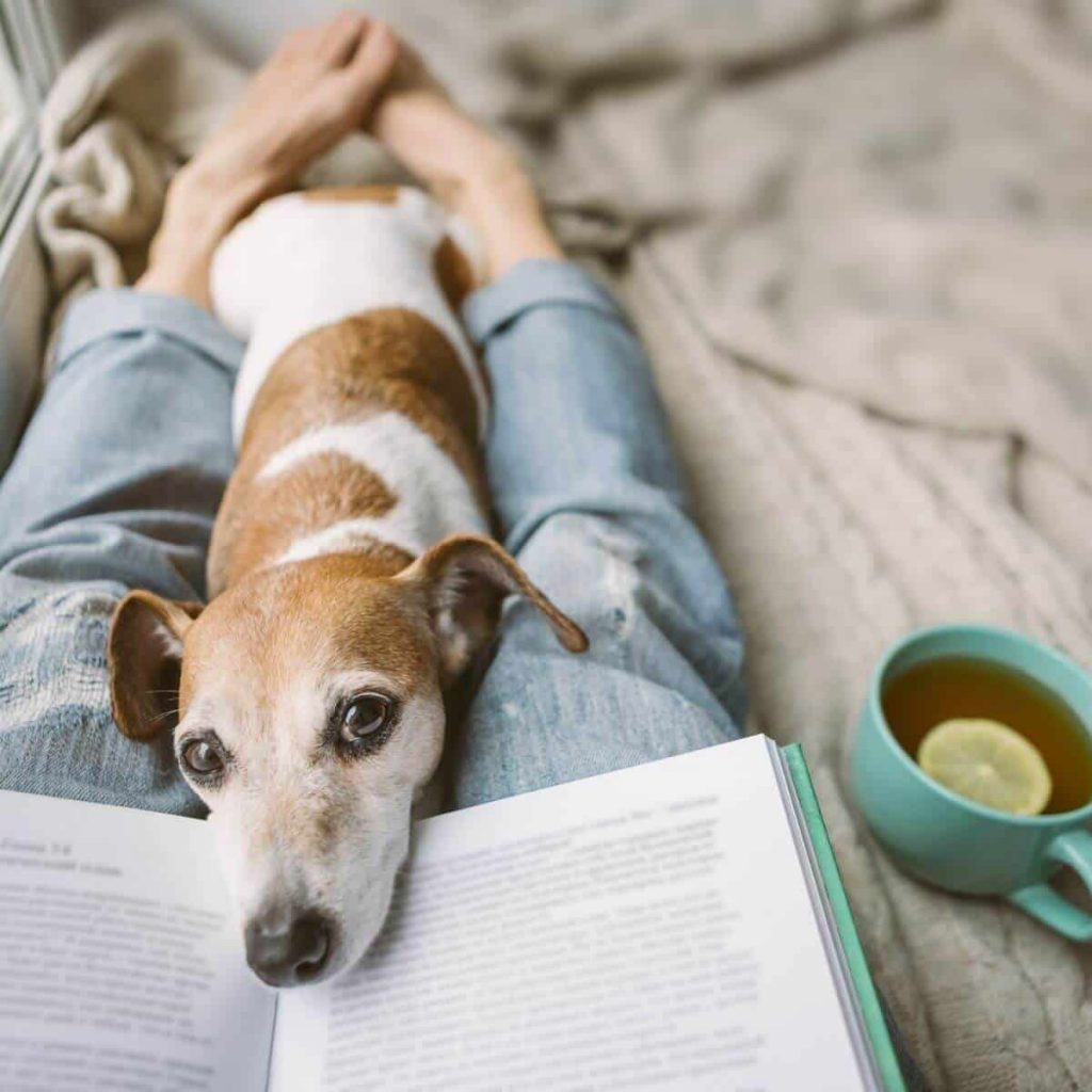 Cozy reading with dog